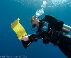 BD-090405-St-Johns-4052618-Homo-sapiens.-Linnaeus.-1758-[Diver].jpg
